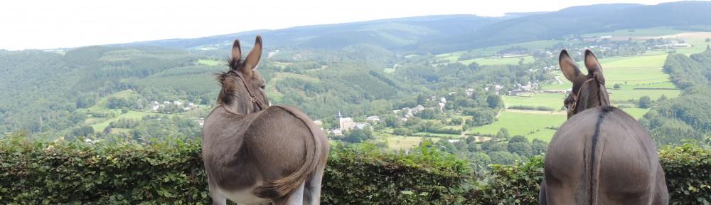 Esprit de l'âne